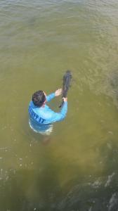 Big Snook Release Tampa Bay Fishing Charter Capt. Matt Santiago