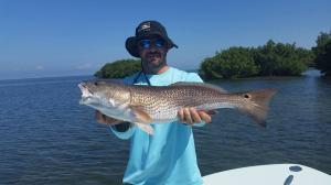 Redfish 15 Tampa Bay Fishing Charter Capt. Matt Santiago