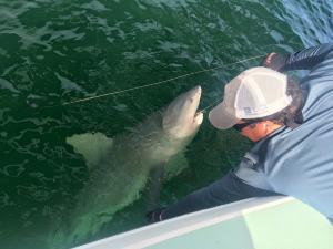 Shark Tampa Bay Fishing Charter Capt. Matt Santiago
