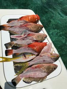 Tampa Bay Fishing Charter Capt. Matt Santiago